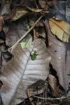 Germinating seed in the rainforest