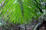 Palm frond [panama_0223]