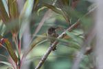 Bird [panama_0234]
