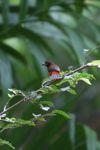 Bird [panama_0407]
