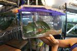 Caraugastor species in danger of extinction