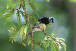 Bird [panama_0498]