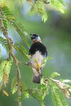 Bird [panama_0500]