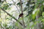 Bird [panama_0502]