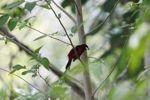 Bird [panama_0503]