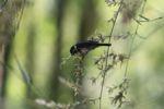Bird [panama_0555]