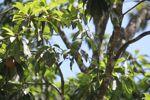 Parrot [panama_0557]