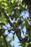 Parrot [panama_0558]