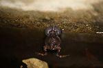 Singing Tungara Frog [panama_0985]