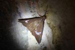 Moth [panama_1056]