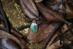 Blue-green bird feather on the forest floor