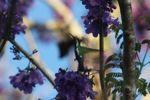 Hummingbird [panama_1226]