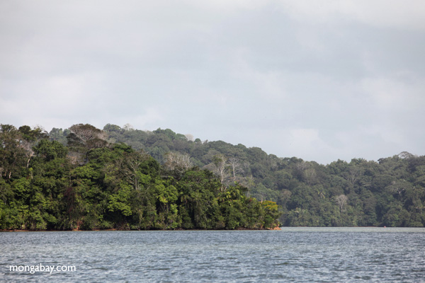Rainforest of Barro Colorado Island