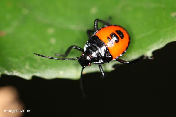 orange and black bug. Black Bedroom Furniture Sets. Home Design Ideas