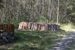 Baru dipotong bundel kayu di New Guinea