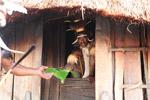 Dani man receiving a pig ear [papua_0471]