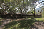 Fence around a Dani village [papua_0722]