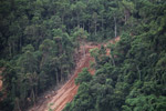 Deforestation-induced landslide near Jayapura [papua_1098]