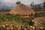 Papua pondok dan taman