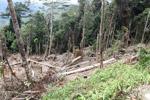 Deforestation in the Arfak mountains [west-papua_0577]