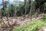 Deforestation in the Arfak mountains [west-papua_0578]