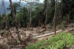 Deforestation in the Arfak mountains [west-papua_0580]