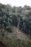 Deforestation in the Arfak mountains [west-papua_0637]