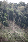 Deforestation in the Arfak mountains [west-papua_0639]