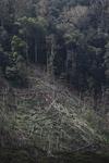 Deforestation in the Arfak mountains [west-papua_0642]
