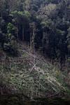 Deforestation in the Arfak mountains [west-papua_0643]