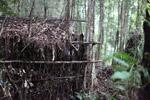 Bird blind in the Arfak mountains [west-papua_0723]