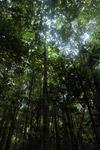 Arfak forest at 7,000 feet
