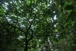 Arfak cloud forest [west-papua_0759]