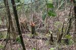 Deforestation in the Arfak mountains [west-papua_0762]