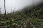 Deforestation in the Arfak mountains [west-papua_0809]