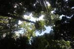 New Guinea hutan hujan kanopi