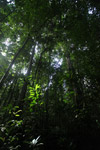 Lowland jungle in New Guinea