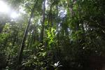 Lowland jungle in New Guinea [west-papua_0945]