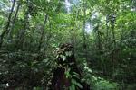 Rainforest tree stump [west-papua_0964]
