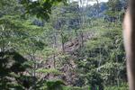 Deforestation outside of Manokwari [west-papua_5233]