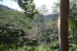Deforestation outside of Manokwari [west-papua_5234]