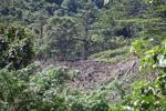 Deforestation outside of Manokwari [west-papua_5238]