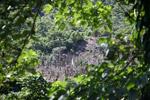 Deforestation outside of Manokwari [west-papua_5244]