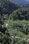 Rainforest river in the Arfak mountains