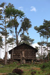 Rumah Kaki Seribu (thousand feet house), a traditional hut in the highlands of West Papua, New Guinea [west-papua_5262]
