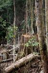 Smallholder deforestation in the Arfak mountains [west-papua_5272]