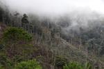 Deforestasi dekat Mokwam, Papua Barat