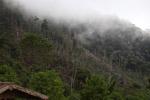 Deforestation near Mokwam, West Papua [west-papua_5302]