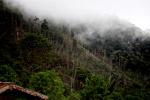 Deforestation near Mokwam, West Papua [west-papua_5303]