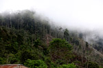 Deforestation near Mokwam, West Papua [west-papua_5304]